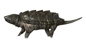 Alligator Snapping Turtle Stock Photos