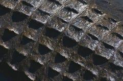 Alligator Texture Stock Image
