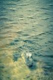 Alligatore americano in lago tropicale Fotografia Stock