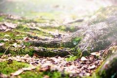 alligatore che prende il sole Fotografie Stock