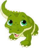 Alligatore del bambino Immagini Stock Libere da Diritti