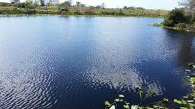 Alligatore della palude dei terreni paludosi di Florida Fotografia Stock