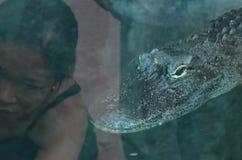 Alligatore e donna Fotografie Stock Libere da Diritti