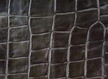 alligatorefterföljdläder Arkivbild