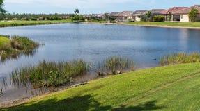 Alligatoren, die in der Sonne auf der Bank von einem Golfplatzteich sich aalen stockfotos