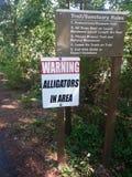 Alligatorer i område Arkivbild