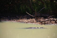 Alligatorfluß, kakadu Nationalpark, Australien Lizenzfreies Stockbild