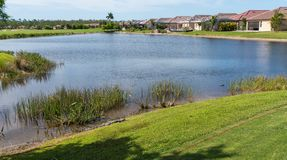Alligators basking in the sun on the bank of a golf course pond stock photos