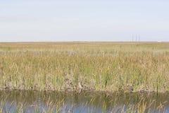 Alligators in Everglades stock foto's