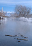 Alligators in a thermal spring in Colorado Stock Photography