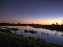 Alligatorschwimmen im Sumpf bei Sonnenuntergang Lizenzfreie Stockbilder