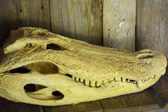 Alligatorskalle fotografering för bildbyråer