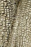 Alligatorwacholderbusch Treebark Hintergrund/Beschaffenheit Lizenzfreie Stockfotos