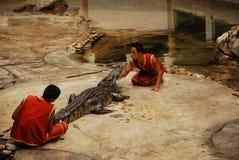 Alligatorzeigen in Thailand Stockbilder