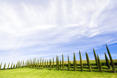 Alligned green cypress trees under blue sky. Alligned beatiful green cypress trees under blue sky in Chianti, Tuscany, Italy Royalty Free Stock Images