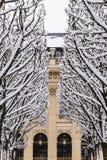 Allineamento degli alberi sotto la neve Immagini Stock