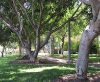 Allineamento degli alberi in un parco Fotografia Stock Libera da Diritti
