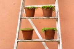 Allineamento dei vasi della pianta Immagine Stock