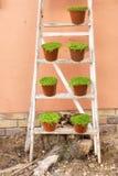 Allineamento dei vasi della pianta su una scala Fotografia Stock Libera da Diritti