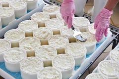Allineamento del materiale del formaggio in muffe per il camembert di produzione Immagini Stock