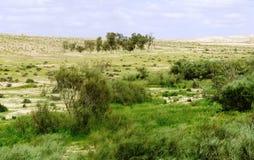 Allineamento dell'albero in un paesaggio del deserto Fotografia Stock Libera da Diritti