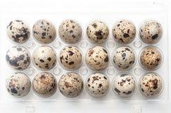 allineamento delle uova di quaglia in un vieuw della cima della scatola di plastica su wh Fotografia Stock Libera da Diritti
