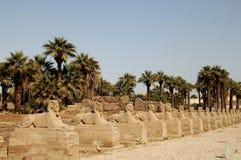 Allineamento di Sphynx a Luxor Immagini Stock Libere da Diritti