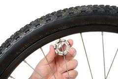 Allineamento e manutenzione della ruota della bici Immagini Stock