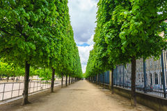 Allineamento verde dell'albero al terrazzo del Feuillants con la SK nuvolosa Fotografia Stock Libera da Diritti