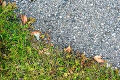 Allini fra erba ed asfalto fuori sulla struttura della strada Fotografie Stock Libere da Diritti