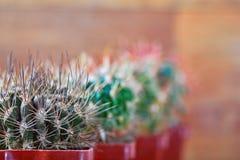 Allini i cactus in vasi che entrano in distanza, la prospettiva, il fuoco selettivo, spazio della copia Priorità bassa vaga Immagini Stock Libere da Diritti
