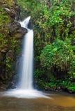 Allini la cascata ed i fogli verdi di una foresta pluviale Fotografie Stock Libere da Diritti