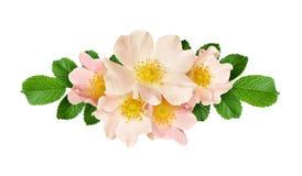 Allini la disposizione con i fiori e le foglie rosa selvaggi Fotografia Stock Libera da Diritti