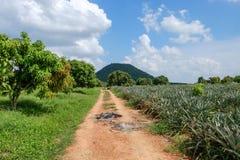 Allini sulla strada alle montagne, bello paesaggio naturale Fotografia Stock