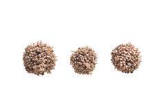 Allium - ξηρό καφετί διακοσμητικό σκόρδο λουλουδιών Στοκ φωτογραφία με δικαίωμα ελεύθερης χρήσης