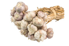 allium σκόρδο sativum στοκ φωτογραφία