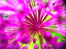 Allium abstracto Fotos de archivo libres de regalías