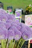 Allium al servizio Immagini Stock