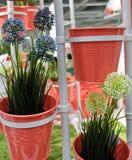 Allium artificiale blu e bianco Giganteum in vasi del metallo Fotografie Stock