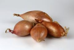 Allium cepa delle cipolle dello scalogno Fotografia Stock