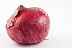 Allium cepa rosso della cipolla della lampadina Fotografie Stock