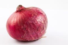 Allium cepa rosso della cipolla della lampadina Immagine Stock Libera da Diritti