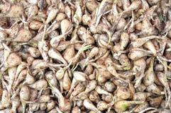 Allium chinense Stock Photos
