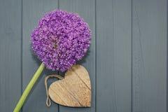 Allium con un cuore di legno Fotografia Stock