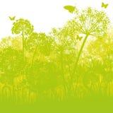 Allium dans le bosquet Photographie stock