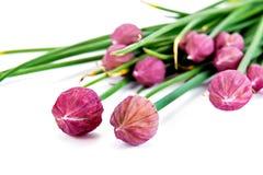 Allium fistulosum, or Welsh onion, or Japanese bunching onion, o Stock Photography