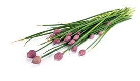 Allium fistulosum, or Welsh onion, or Japanese bunching onion, o Royalty Free Stock Photography