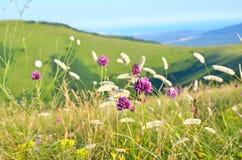 Allium flowers on mountain meadow Royalty Free Stock Photos