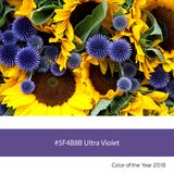 Ultra Violet Color of the Year - Alliums and sunflowers Royalty Free Stock Photography