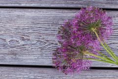 Allium flowers on vintage wooden background. stock photography